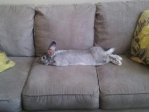 Sofa Bunny