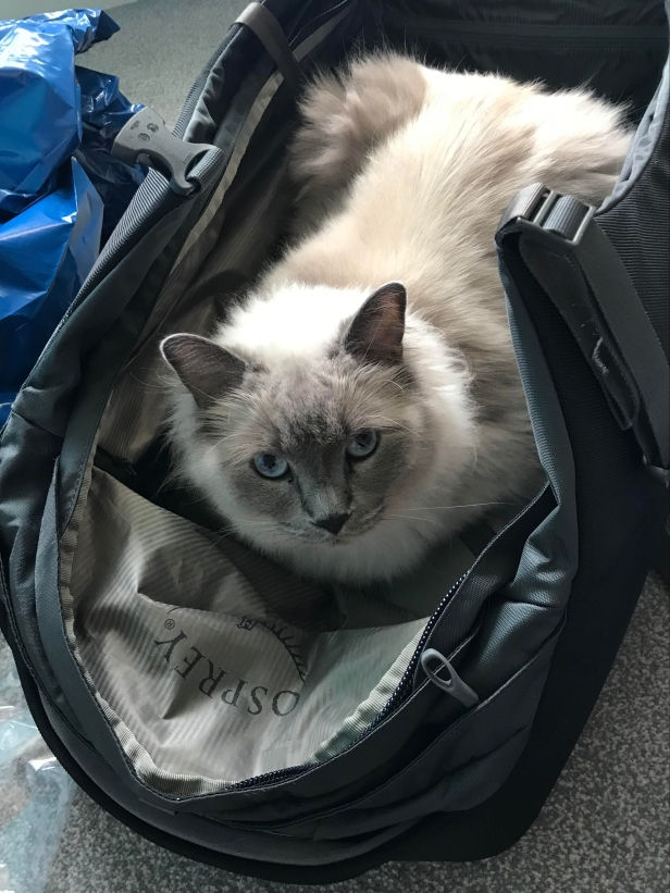 Pack the Cat